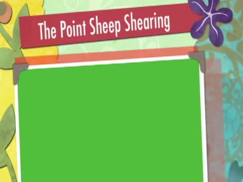The Point Sheepshearing Kaikoura